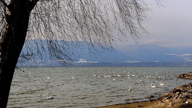 Le lac et la faune aquatique...