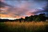 golden_meadows