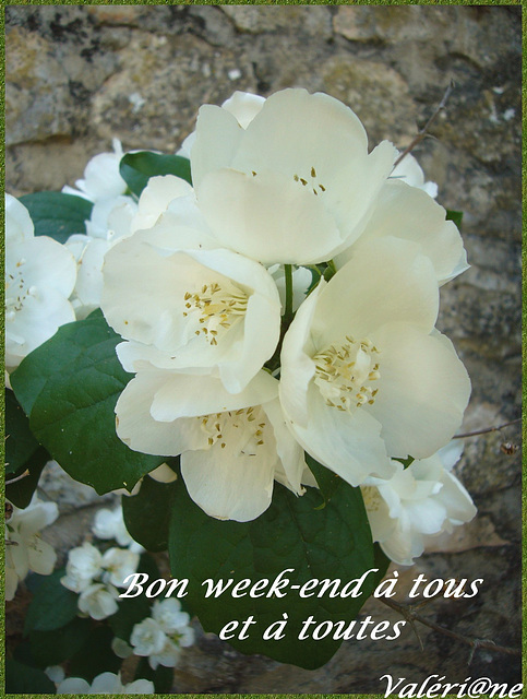 Bon week-end mes amis (ies)