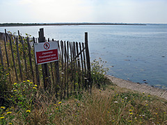 Japanese Knotweed Area