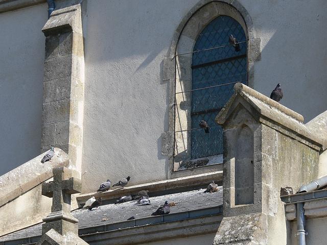 Tauben auf der Notre-Dame