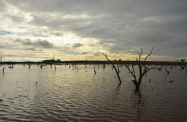 Australia. Murray Mallee