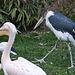 20110416 0952RAw [D~LIP] Marabu, Rosapelikan, Heiliger Ibis, Vogelpark, Detmold-Heiligenkirchen