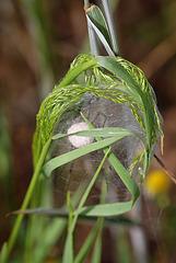 Cocon de Pisaure-Petite maison dans la prairie