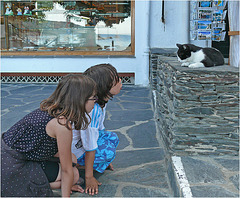 son altesse royale .........: chat à Cadaques