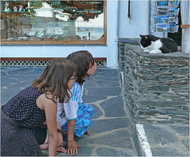 son altesse royale .........: chat à Cadaques