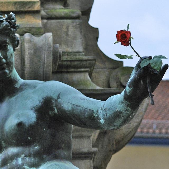 meine Pfingst-Rose