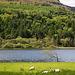 Irland - wie ich es mag