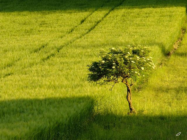 allein im Feld#