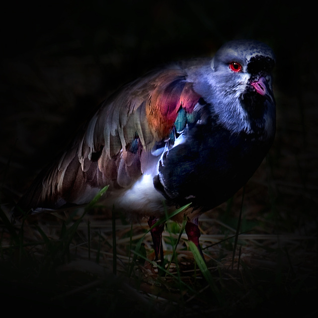 plumage