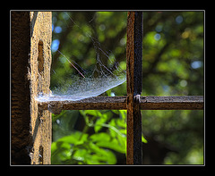 white_window_web