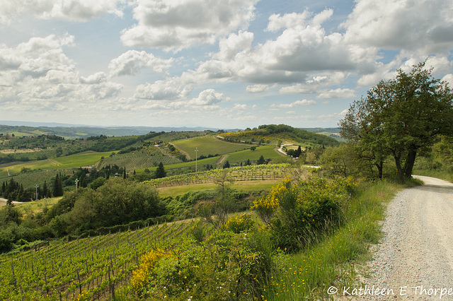 Greve in Chianti Florence Tuscany - 052814-011