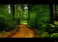 im Wald~ come on, follow me :-)