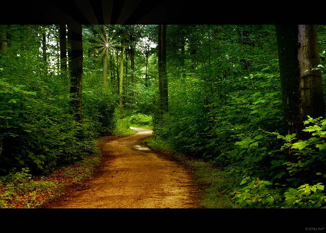 im Wald~ come on, follow me :-)