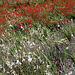 flowerpower im Wind