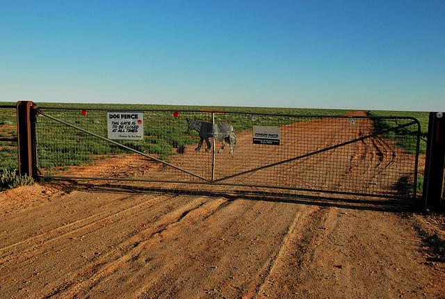 Dog Fence. Muloorina
