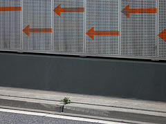 bordsteinpflanze