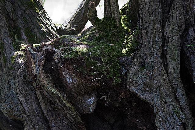 20110424 1266RTw [D-PB] Baum(nest)