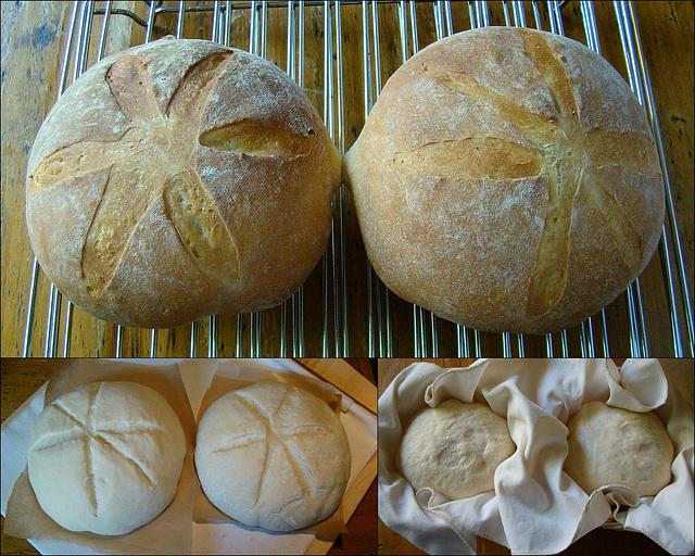 Panmarino – Italian Rosemary Bread