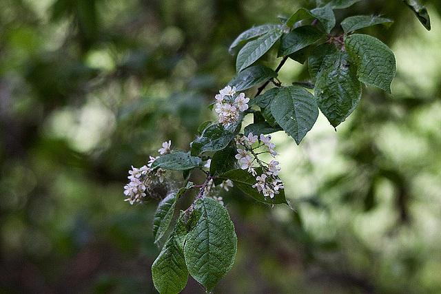 20110424 1254RTw [D-PB] Baum-Blüten