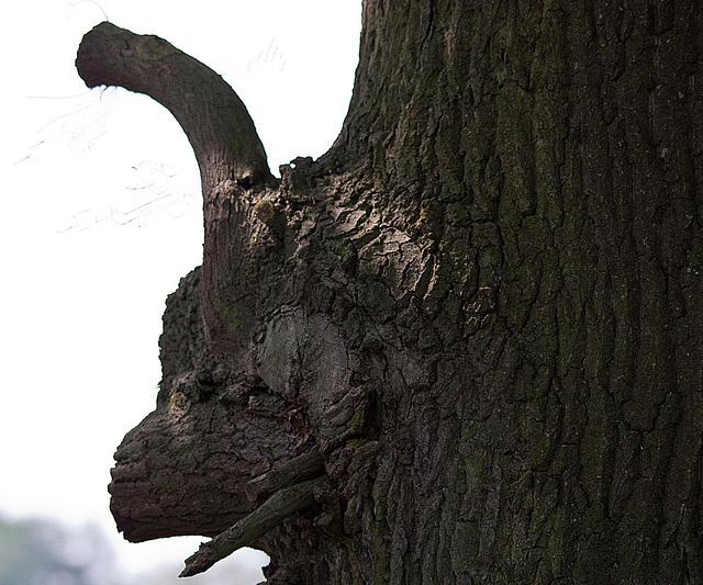 20110424 1249RTw [D-PB] Baum(kunst) Schafsgesicht