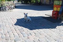 Copenhague Dans le quartier de Christiania