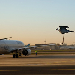 dove_airlines
