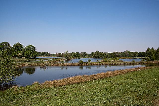20110424 1314RWfw Steinhorster Becken, Naturschutz