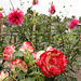 jardin de mon ami