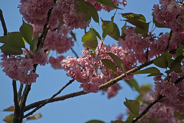 20110424 1336RAw [D-PB] Baum(blüte)