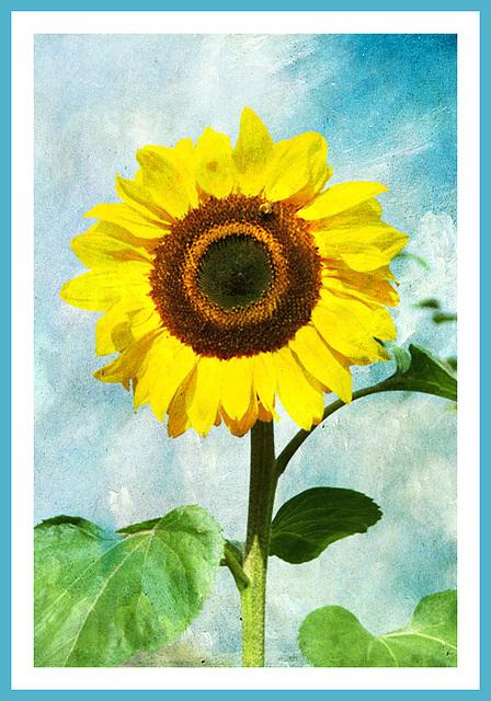 ce grand soleil ouvre son coeur vers vous