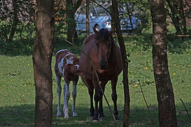20110424 1321RAw [D-PB] Pferd