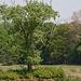 20110424 1304RTw [D-PB] Baum