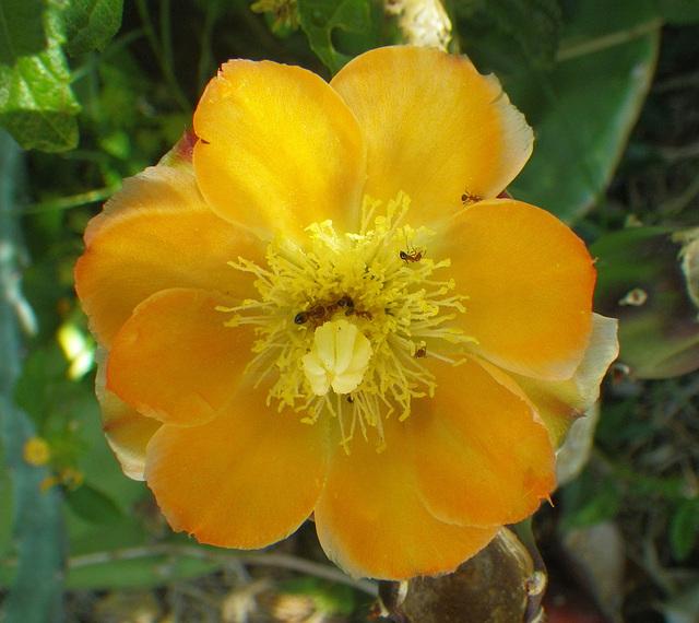 Cactus Flower (0025)