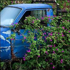 flowers_of_crete