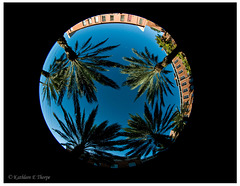 Fisheye Four Palms