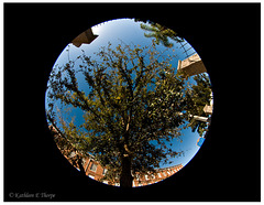Fisheye tree