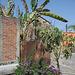 Briques et palmiers / Bricks and palm trees - 22 mars 2011