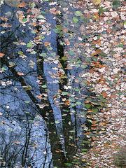 l'arbre qui ne sait se séparer de ses feuilles...