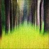 Trees   Bomen
