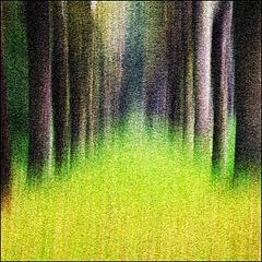 Trees | Bomen