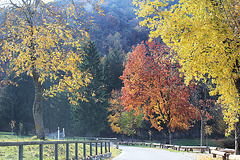 Herbst am Ledrosee, Rundweg