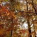 der Wald leuchtet