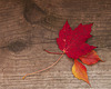 L'automne tire à sa fin...