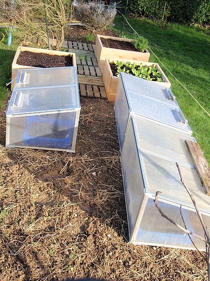 Hivernage des plantes page 1 for Hivernage des plantes