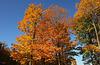 L'automne vêtue de parure d'or