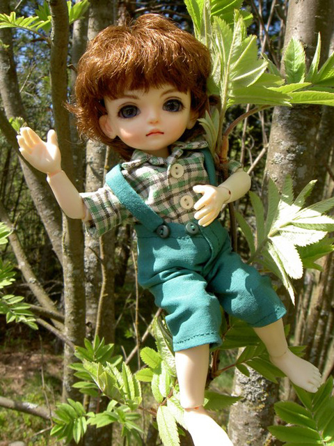 Sampo in a mountain ash