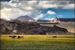 yellow_meadows