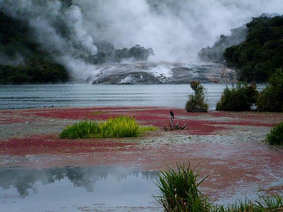 Hidden Valley At Lake Orakei