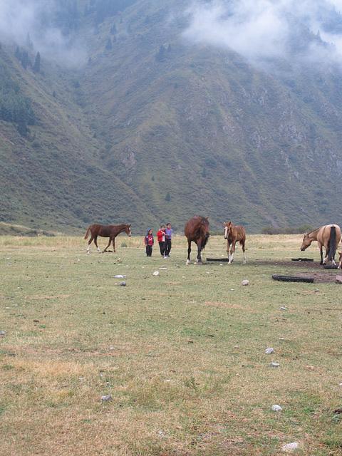 nuées, enfants, chevaux en liberté
